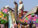 Elefantes no festival Lahtmar Holi.  Na Índia, entre fevereiro e março, a chegada da primavera é recebida com uma festa multicolorida e um ritual religioso hinduista da celebração da vitória entre o bem e o mal. . E é o único dia em que todas as castas podem se juntar. <br><br> Palavras-chave: Índia, primavera, festa, ritual, religioso, hinduista, cores, tradição, Lahtmar Holi, Festival das Cores, castas